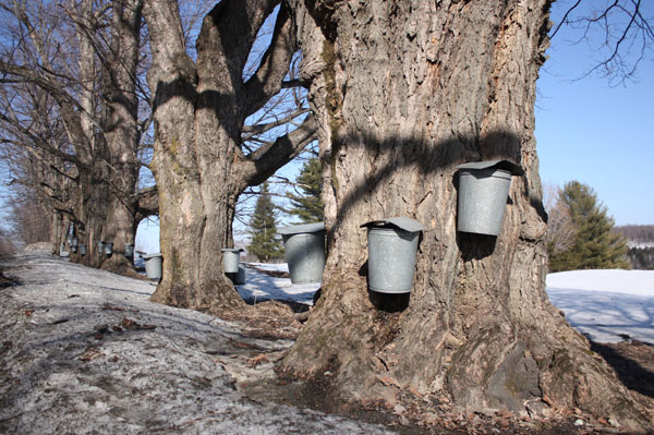 Photos of maple syrup and sugaring season taken in Brookfield and Chester, Vermont.